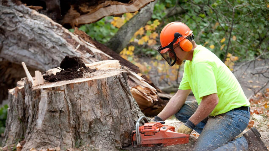 What Are the Top Benefits of Hiring Tree Removal Services?